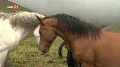 Какви са последствията от изваждането на конете от списъка със селскостопанските животни