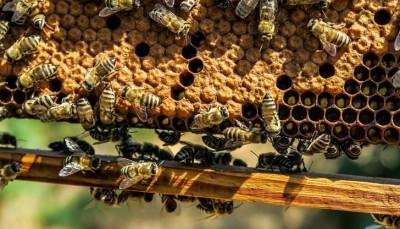 Пчеларите за лошата реколта от мед: Проблемът с пестиците се задълбочава, липсва контрол