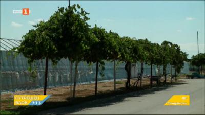 Собственик на оранжерии в Ръжево Конаре изгони наетите украински работници