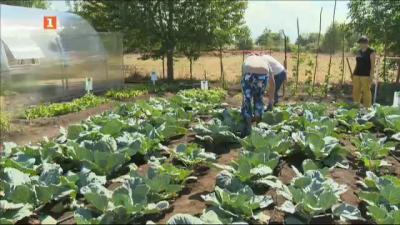 Младежи със специфични проблеми имат зеленчукова градина в Божурище