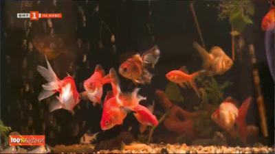 На разходка във Варненския аквариум