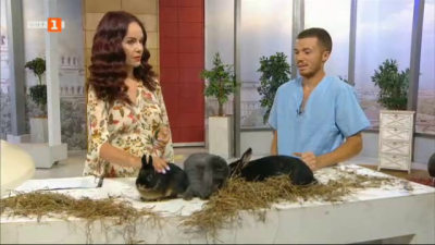 Зооприятели: Как да се грижим за декоративните зайци