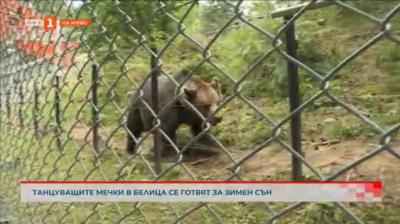 Танцуващите мечки в Белица се готвят за зимата