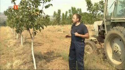 Тодор и неговата изключителна орехова градина