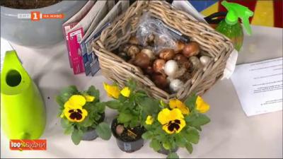 Как да засадим луковични цветя?