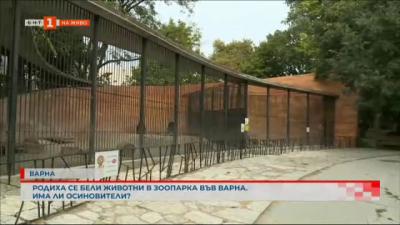 Какви са условията в зоопарковете и защо се родиха бели животни във Варна?