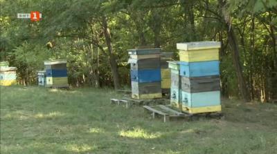 Ухание на мед и горчива равносметка