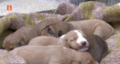 Изоставени кучета намериха нови стопани