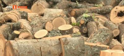 Има ли достатъчно дърва за огрев в Благоевградско