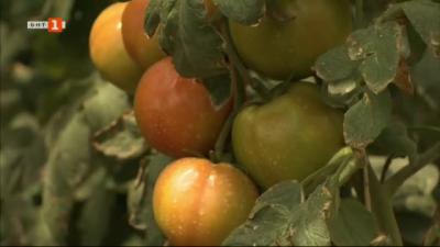 Семейна оранжерия за зеленчуци