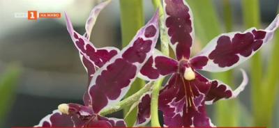 Оранжерия за орхидеи във Варна