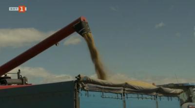 Износът на български ориз
