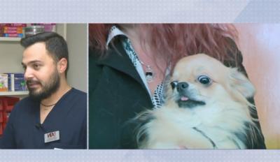 Започва вътрешно разследване на Ветеринарния съюз по случая с малкото куче Рая