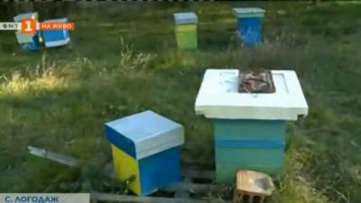 Какво ядат пчелите през зимата?