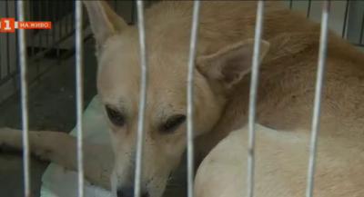 Увеличават се популациите на уличите животни. Как се справят в Сандански?
