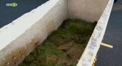 Биоразградим ковчег създава живот след смъртта