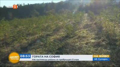 Залесяват пустеещи местности край София