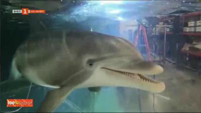 Делфени роботи - бъдещето на световните аквариуми