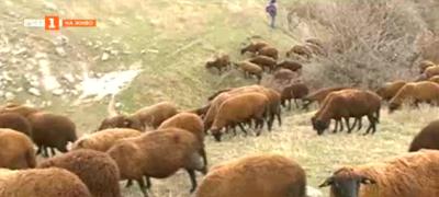Селскостопански производители от Варна и Добрич си помогат в беда