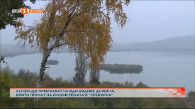 Акция в резервата Сребърна за премахването на дървета, чужди за нашите географски ширини