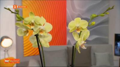 Как да отгледаме орхидея