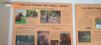 Къде е царството на кафявата мечка - музей на мечката в с.Триград