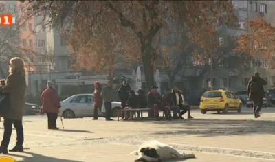 Мерки срещу безстопанствените кучета в Благоевград