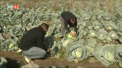 Логистичният център в Калековец търгува с български зеленчуци