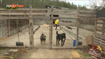 Млад мъж от Благоевград отглежда бездомни кучета в приют