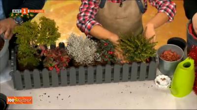 Уроци по градско градинарство с Боряна Михайлова: Зимна градина в саксия