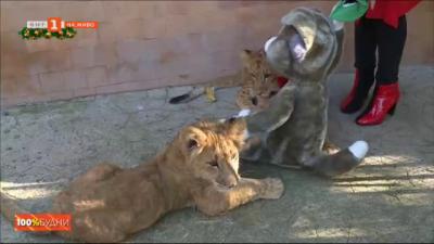 Бебета животни във Варненския зоопарк