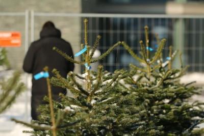 Варненци купуват по-малко коледни дръвчета тази година