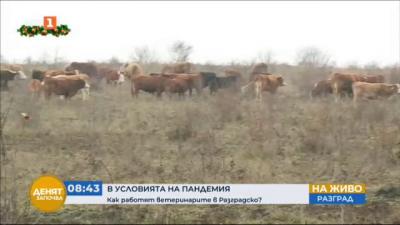 Как работят ветеринарите в Разградско по време на пандемия?