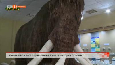 Екомузеят в Русе с единствена в света находка от мамут