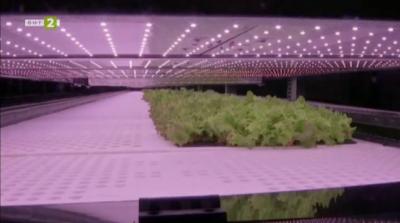 Вертикална ферма за зеленчуци ще черпи по-малко ресурси
