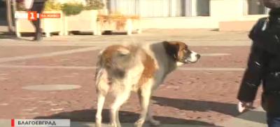 Ще има ли скоро нов приют за бездомни кучета в Благоевград