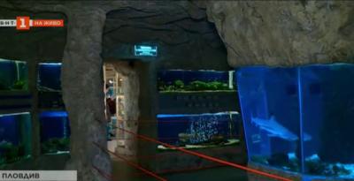 Как и кога децата могат да получт подарък зъб от акула в Природонаучния музей в Пловдив