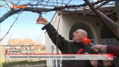 Празнуваме Трифон Зарезан в село Черниче по стара традиция