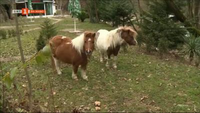Дете пострада от свободно пуснати понита в парк Бачиново в Благоевград
