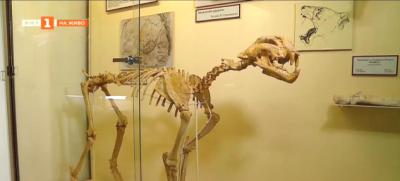 Динотериум в палеонтологичния музей в Асеновград