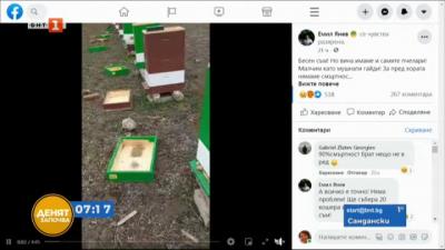 Тежка зима за пчеларите в България