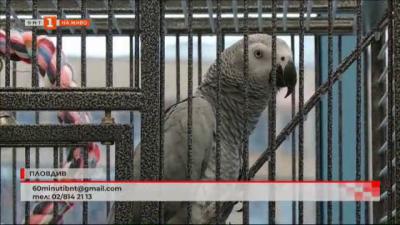 Папагалът фен на Ботев-Пловдив