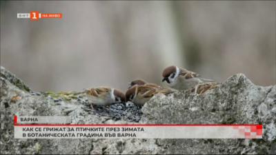 В ботаническа градина във Варна през зимата се полагат специални грижи за птичките
