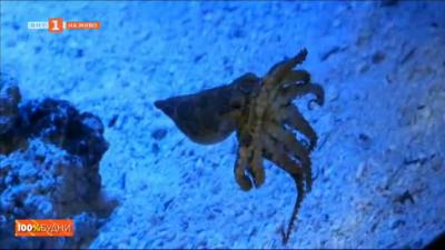 Най-отровните животни на планетата гостуват в Пловдив