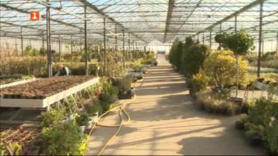Декоративните растения - красота за хората, проблеми за производителите