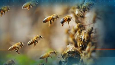 Пчеларите в спор с държавата: Нямаме нито една мярка, която да компенсира загубите