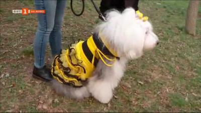 Мартеници с терапевтичното куче Мон – в подкрепа на лечението на болно дете
