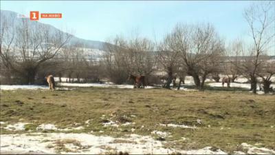 Опасност от катастрофи заради безстопанствени коне край Дупница