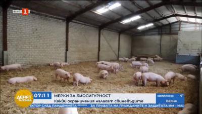 Още огнища на африканска чума по свинете в Румъния. Какви ограничения налагат свиневъдите