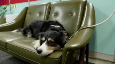 Умен нашийник превежда пет емоции при кучето